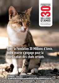 MESURES CONTRE LA PROLIFÉRATION DES CHATS ERRANTS